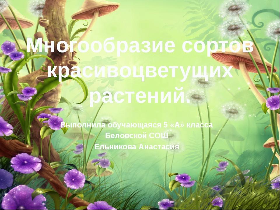 Многообразие сортов красивоцветущих растений. Выполнила обучающаяся 5 «А» кла...