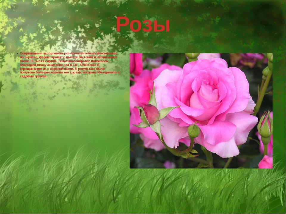 Современный ассортимент роз исключительно многогранен по окраске, форме, аром...