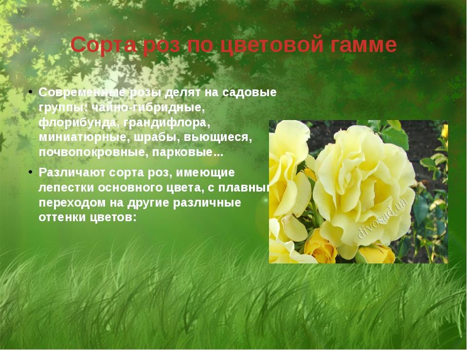Сорта роз по цветовой гамме Современные розы делят на садовые группы: чайно-г...