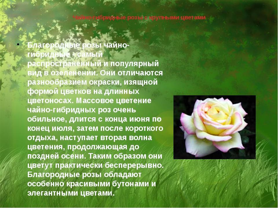 Чайно-гибридные розы с крупными цветами Благородные розы чайно-гибридные - са...