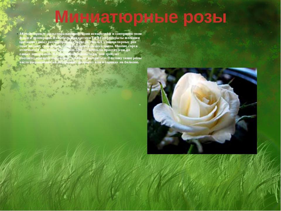 Миниатюрные розы Миниатюрные розы поражающие своим изяществом и совершенством...
