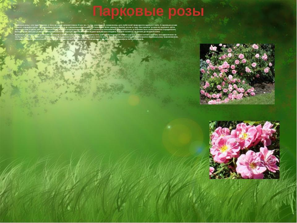Парковые розы Парковые розы - это чудо садовое, к тому же еще и неприхотливое...