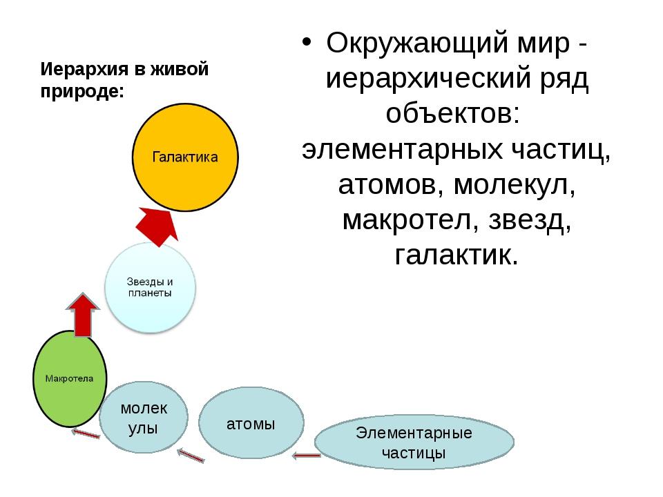 Иерархия в живой природе: Окружающий мир - иерархический ряд объектов: элемен...