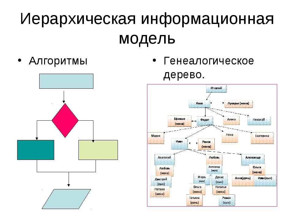 Иерархическая информационная модель Алгоритмы Генеалогическое дерево.