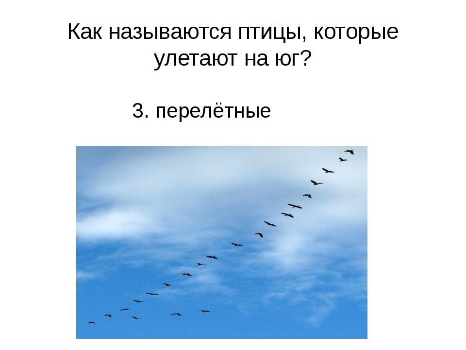 Как называются птицы, которые улетают на юг? 3. перелётные