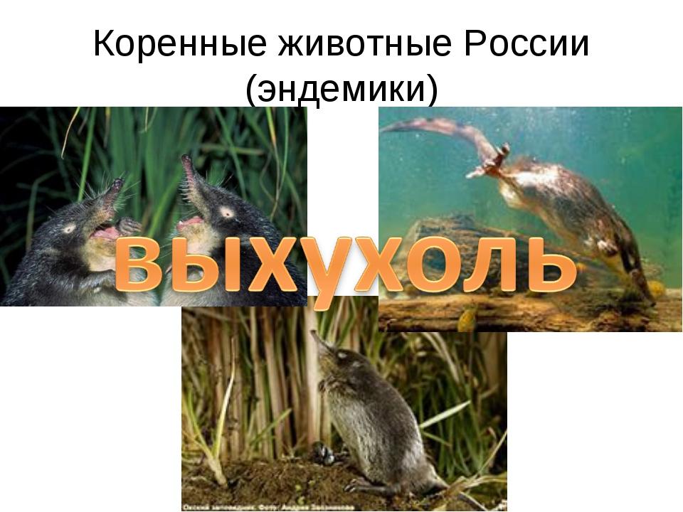 Коренные животные России (эндемики)