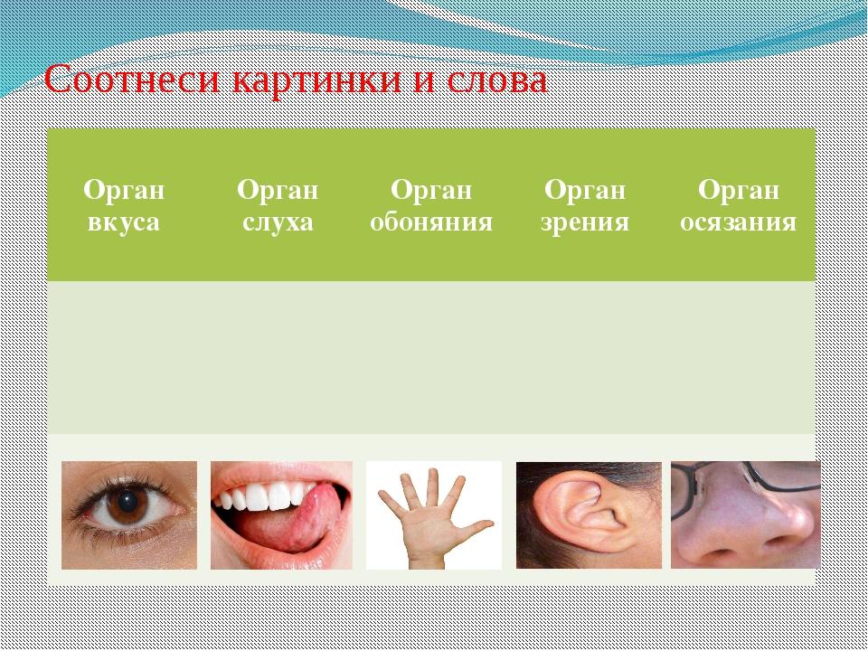 Соотнеси картинки и слова Орган вкуса Орган слуха Орган обоняния Орган зрения...