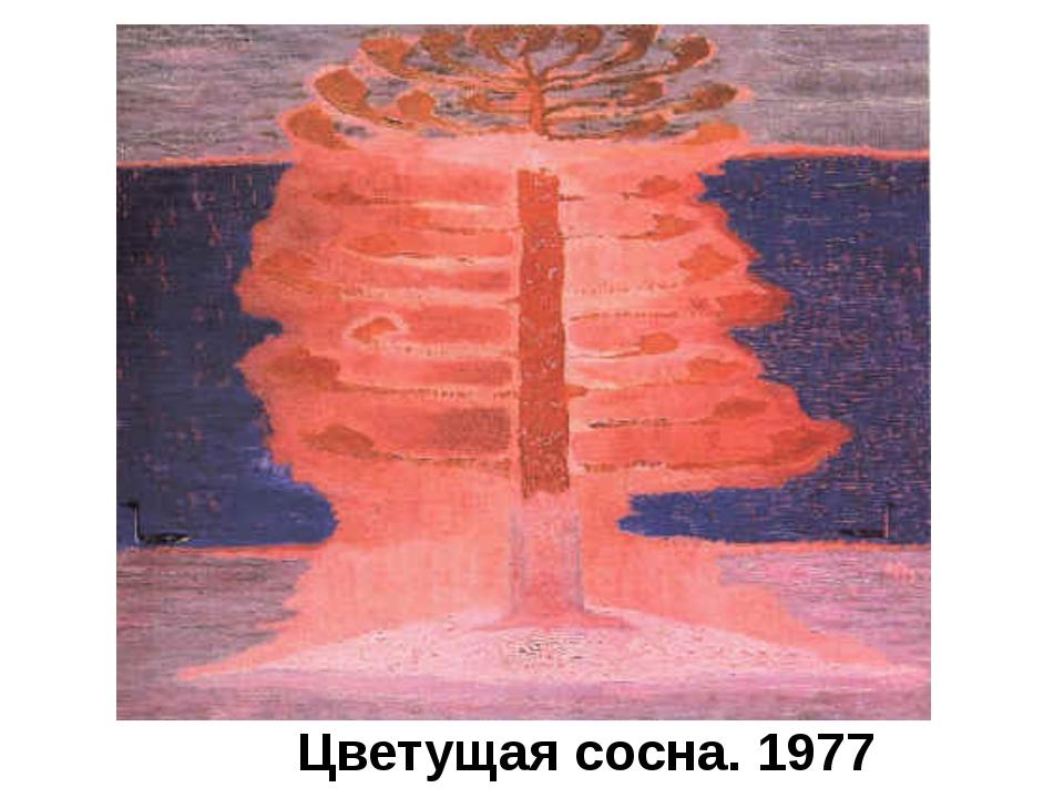 Цветущая сосна. 1977