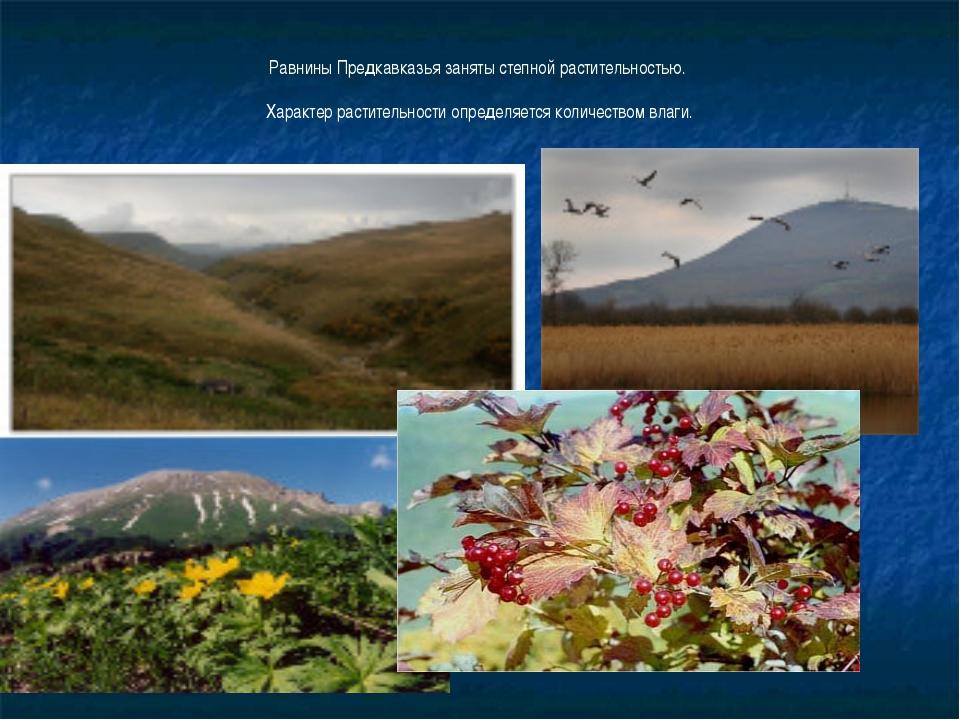 Равнины Предкавказья заняты степной растительностью. Характер растительности...