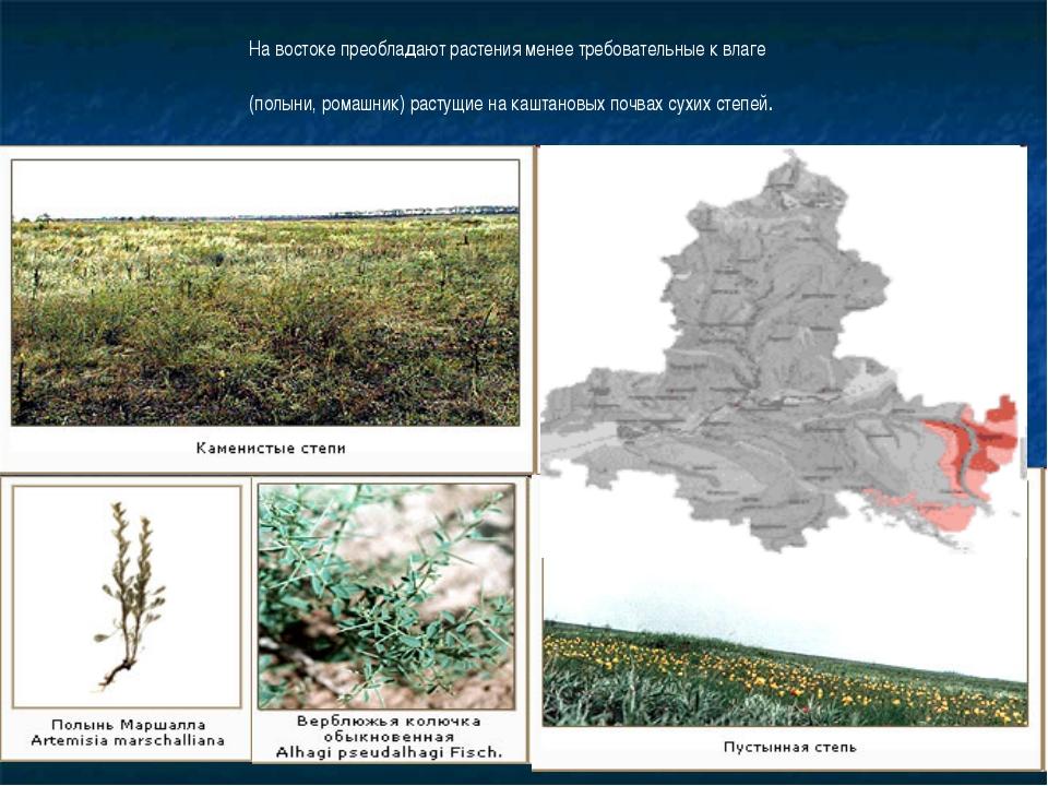 На востоке преобладают растения менее требовательные к влаге (полыни, ромашни...