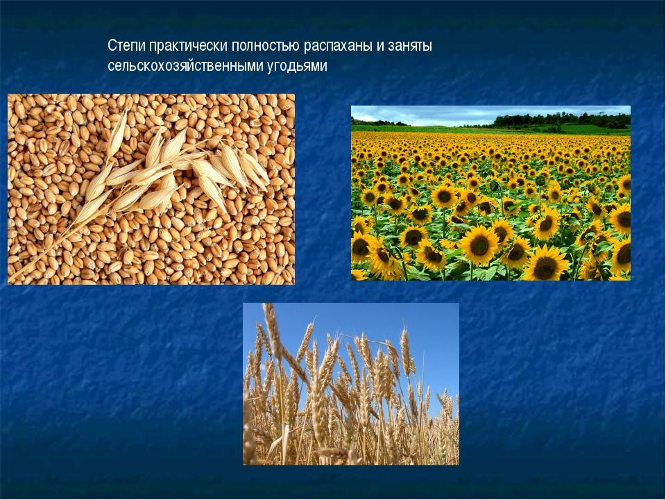 Степи практически полностью распаханы и заняты сельскохозяйственными угодьями