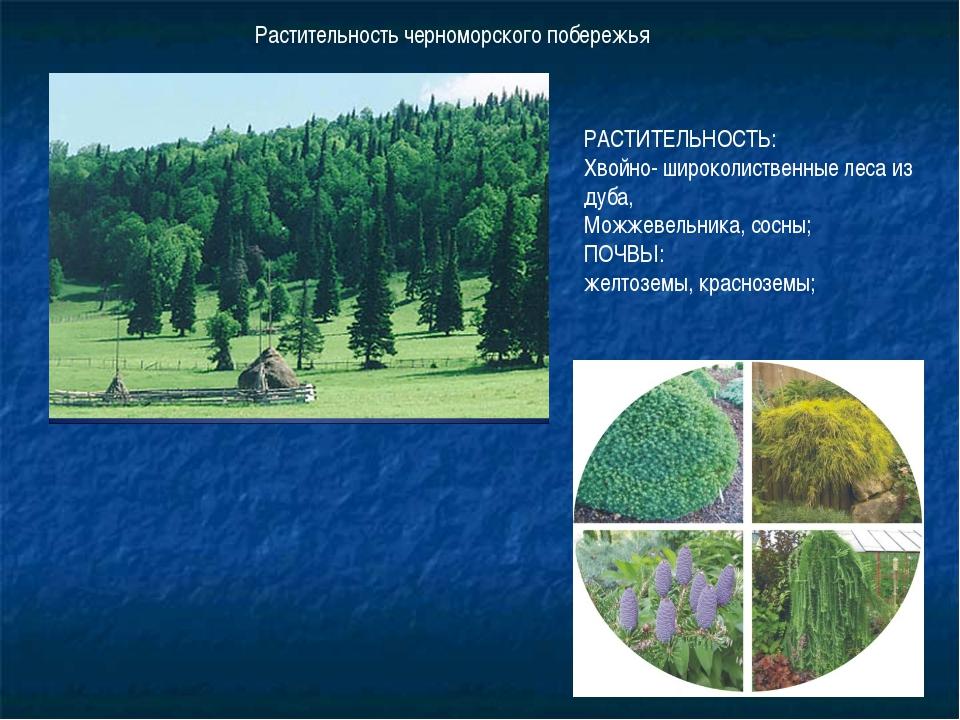 Растительность черноморского побережья РАСТИТЕЛЬНОСТЬ: Хвойно- широколиственн...