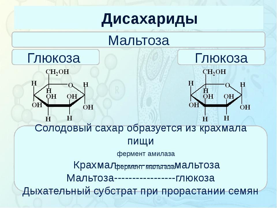 Дисахариды Зорина Наталья Николаевна, учитель биологии и экологии Мальтоза Гл...