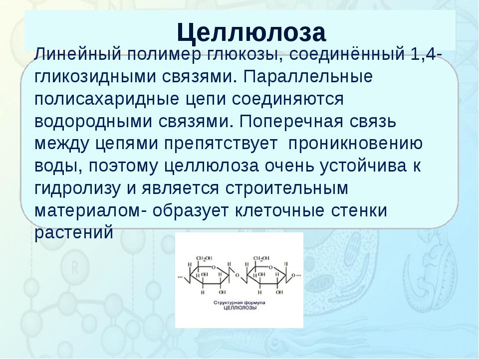 Целлюлоза Зорина Наталья Николаевна, учитель биологии и экологии Линейный пол...