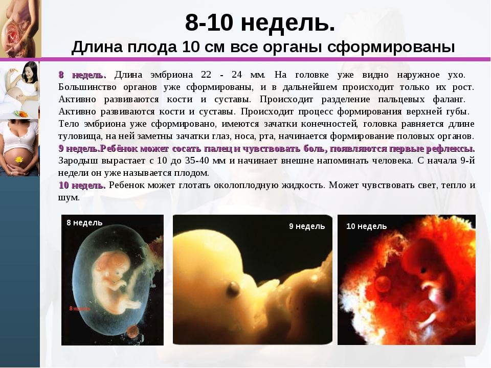 8-10 недель. Длина плода 10 см все органы сформированы 8 недель. Длина эмбрио...