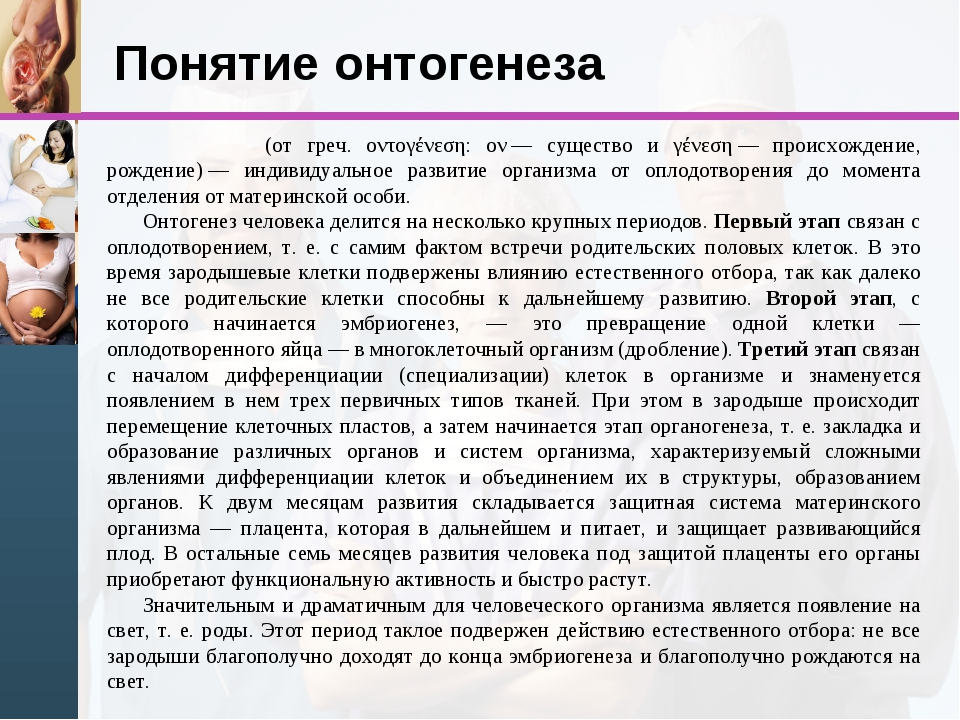 Понятие онтогенеза Онтогене́з (от греч. οντογένεση: ον— существо и γένεση—...