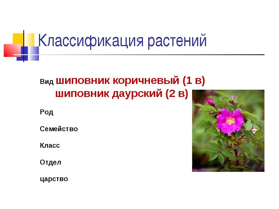 Классификация растений Вид шиповник коричневый (1 в) шиповник даурский (2 в)...