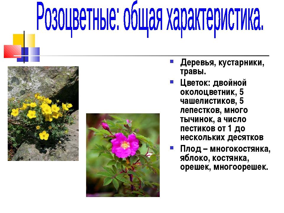 Деревья, кустарники, травы. Цветок: двойной околоцветник, 5 чашелистиков, 5...