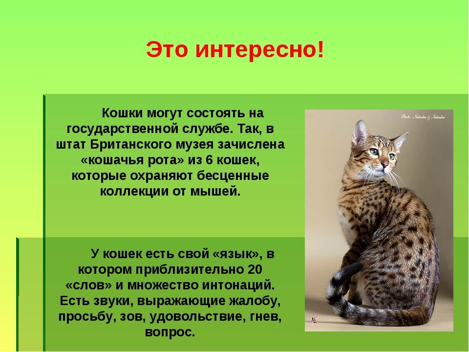 Небольшой доклад о кошках 2324