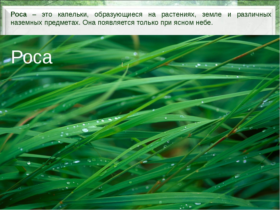 Роса – это капельки, образующиеся на растениях, земле и различных наземных п...