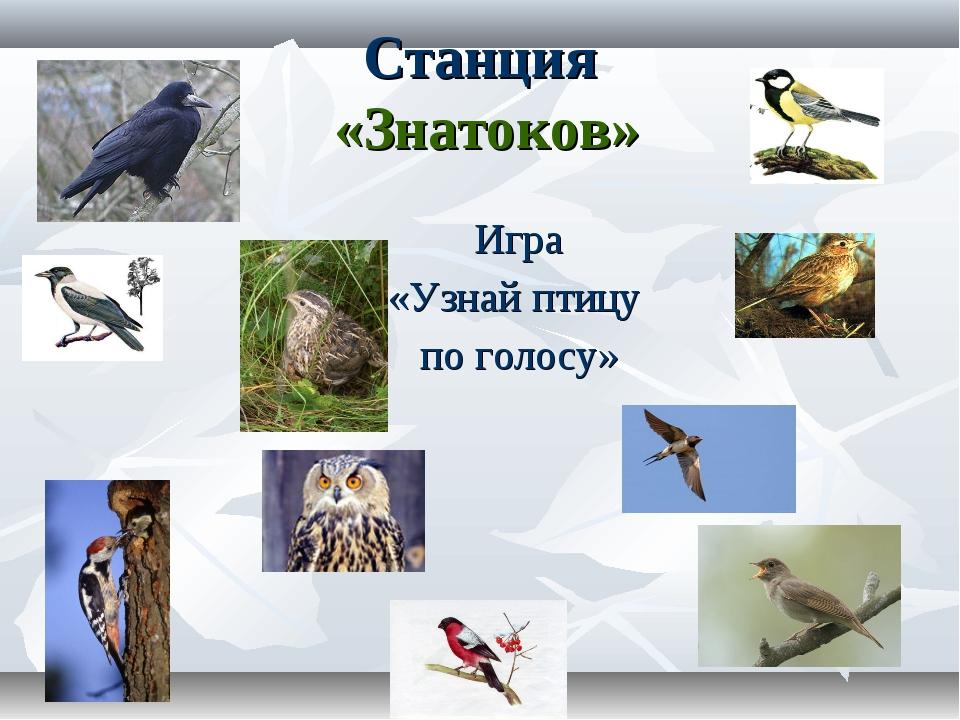 Игра «Узнай птицу по голосу» Станция «Знатоков»