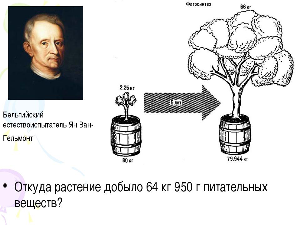 Откуда растение добыло 64 кг 950 г питательных веществ? Бельгийский естествои...