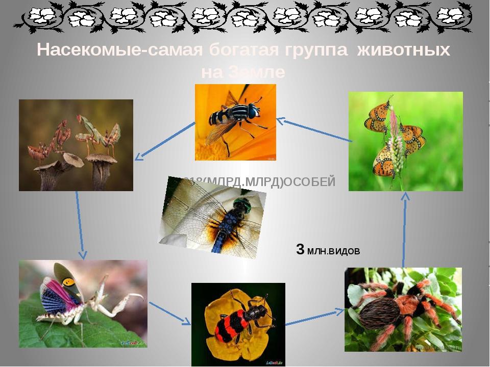 Насекомые-самая богатая группа животных на Земле 3 МЛН.ВИДОВ 1018(МЛРД.МЛРД)О...