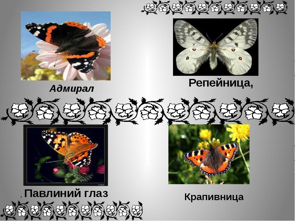 Адмирал Крапивница Репейница, , Павлиний глаз