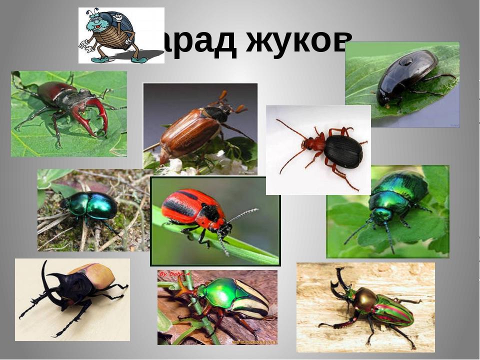 Парад жуков