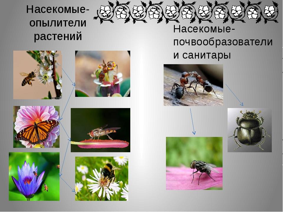 Насекомые-опылители растений Насекомые-почвообразователи и санитары
