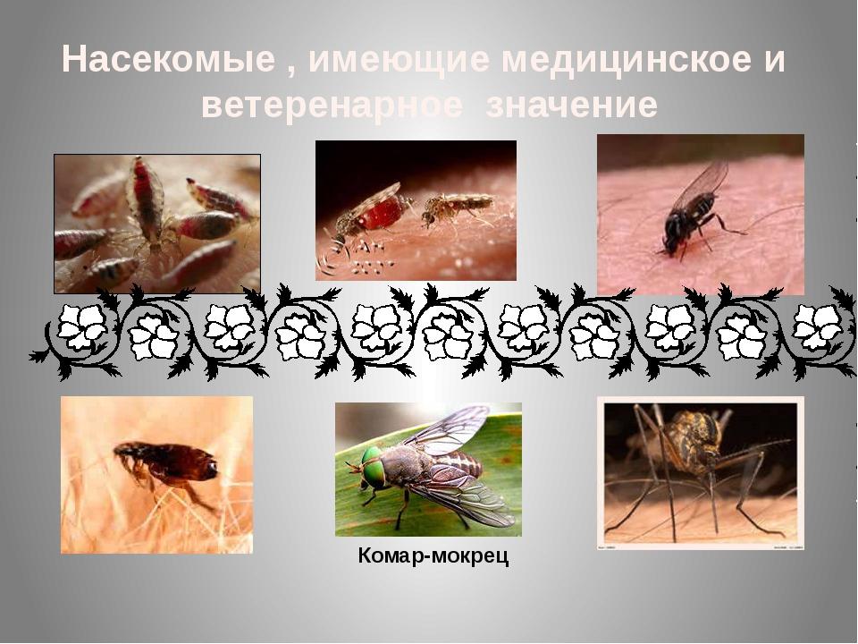 Насекомые , имеющие медицинское и ветеренарное значение Комар-мокрец