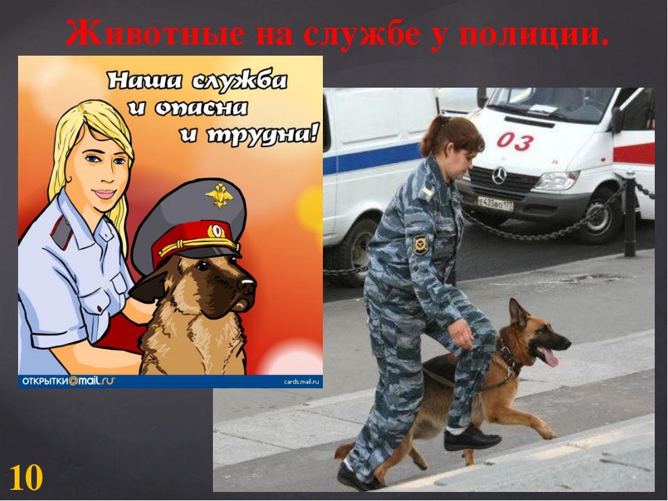 Животные на службе у полиции. 10