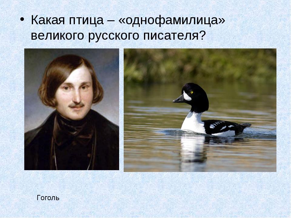 Какая птица – «однофамилица» великого русского писателя? Гоголь