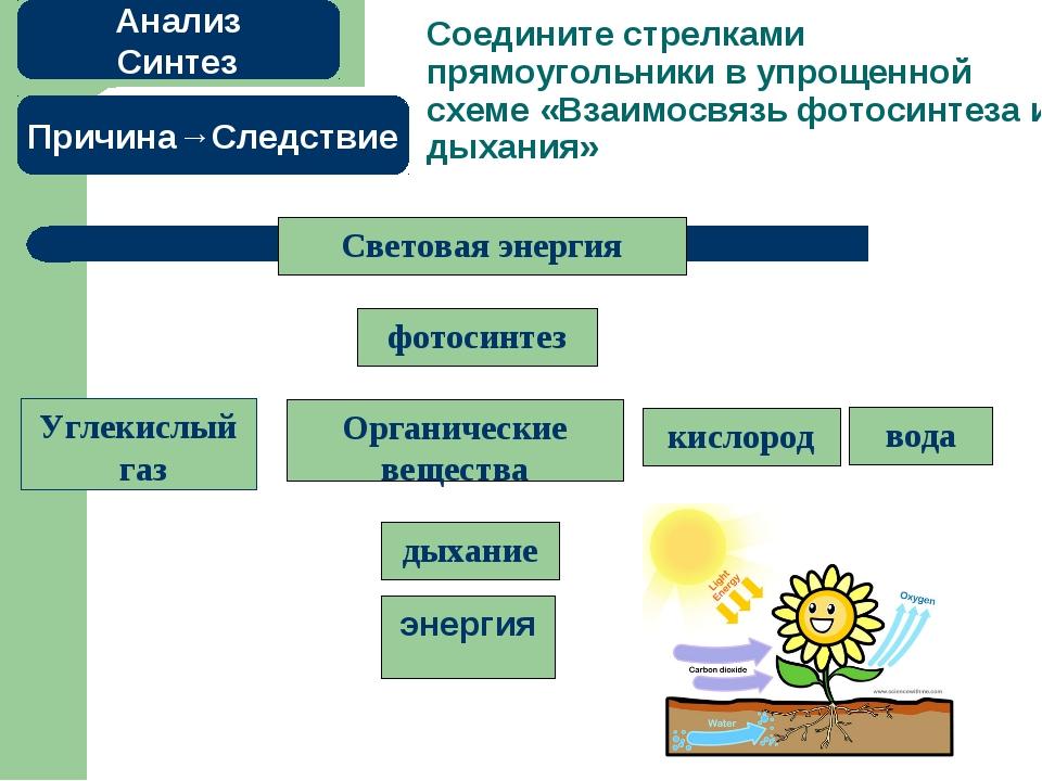 Соедините стрелками прямоугольники в упрощенной схеме «Взаимосвязь фотосинте...