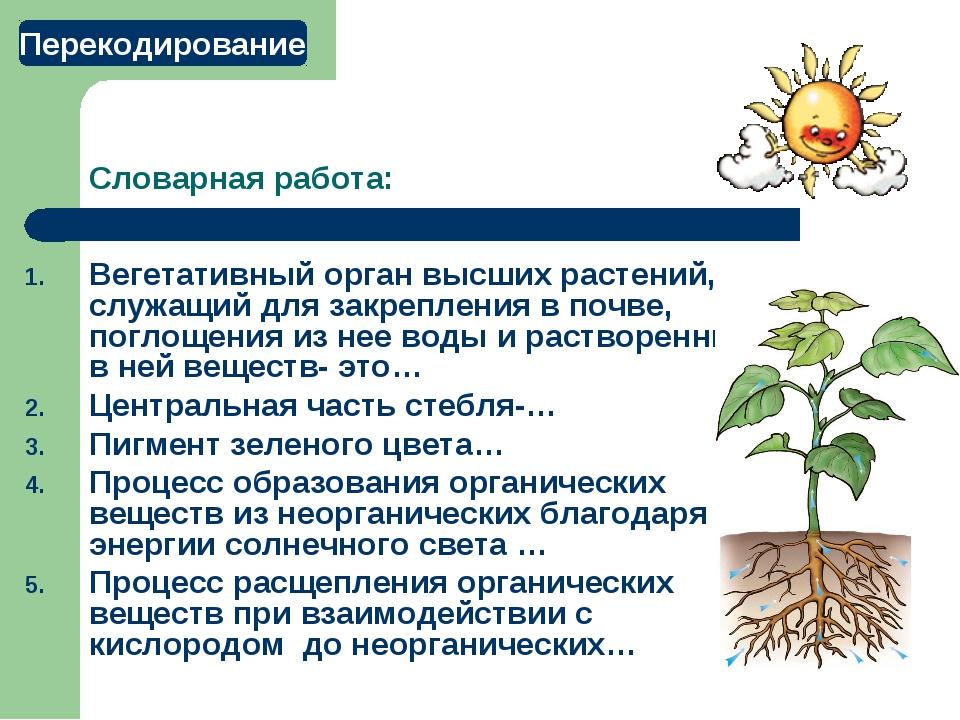 Словарная работа: Вегетативный орган высших растений, служащий для закреплени...