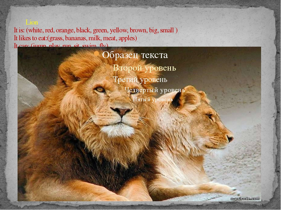 Lion It is: (white, red, orange, black, green, yellow, brown, big, small ) I...