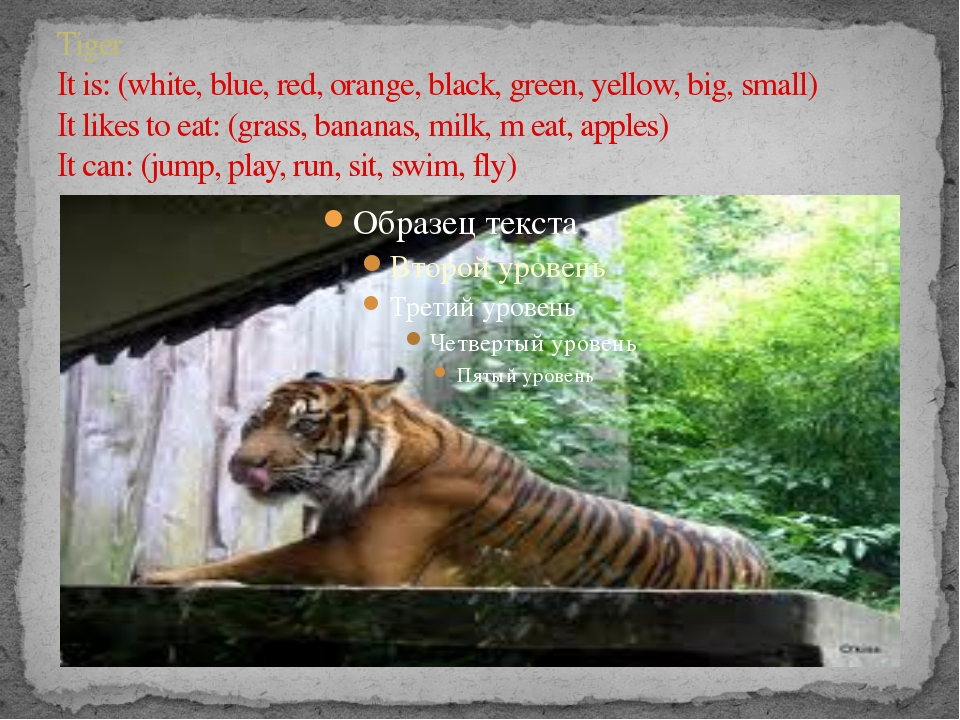 Tiger It is: (white, blue, red, orange, black, green, yellow, big, small) It...