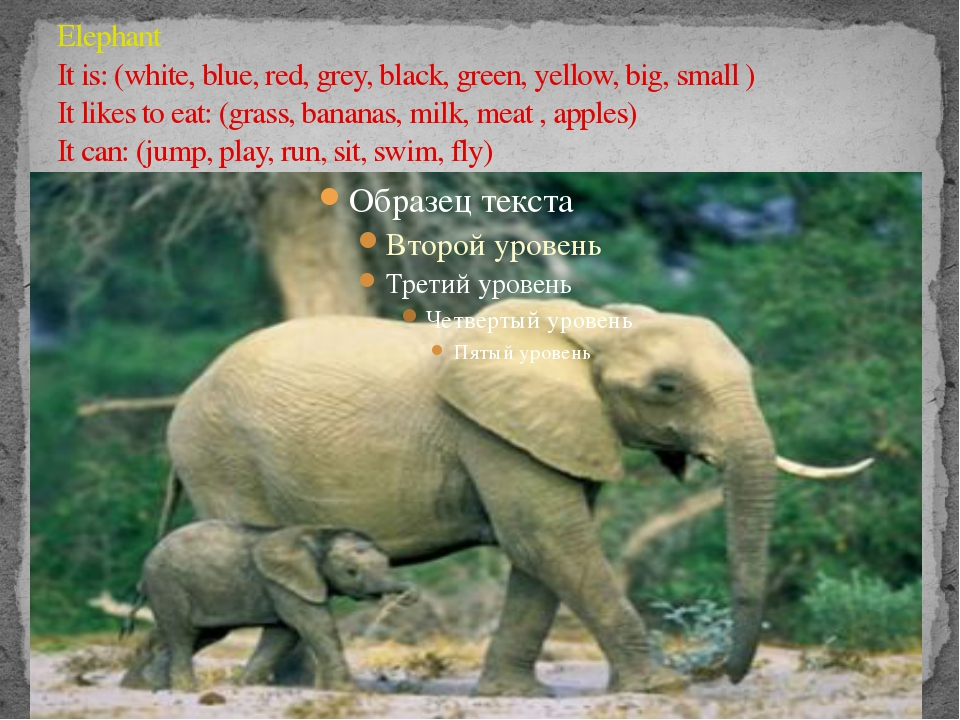 Elephant It is: (white, blue, red, grey, black, green, yellow, big, small ) I...