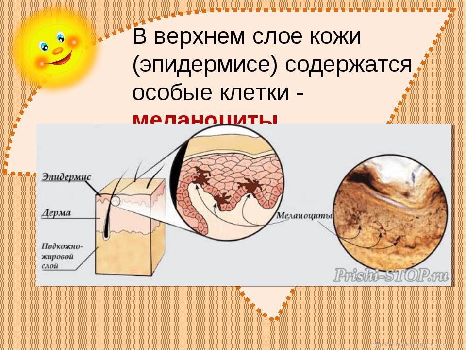 В верхнем слое кожи (эпидермисе) содержатся особые клетки - меланоциты. http:...