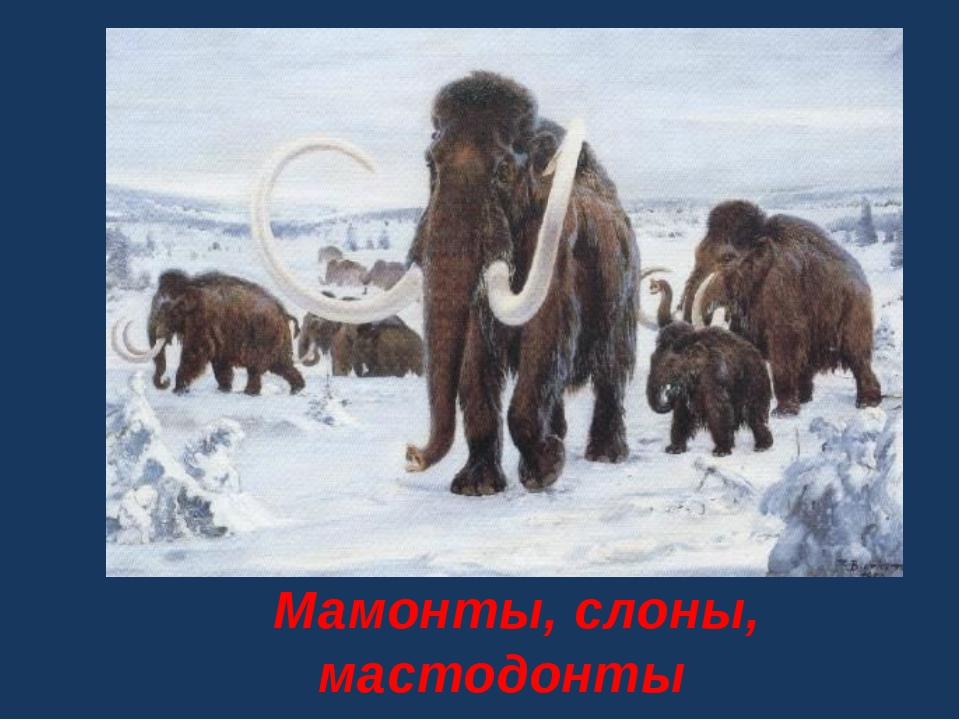 Мамонты, слоны, мастодонты