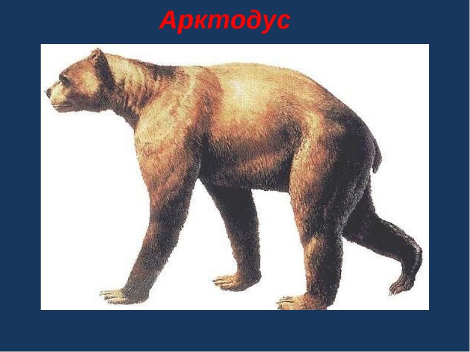 . Арктодус