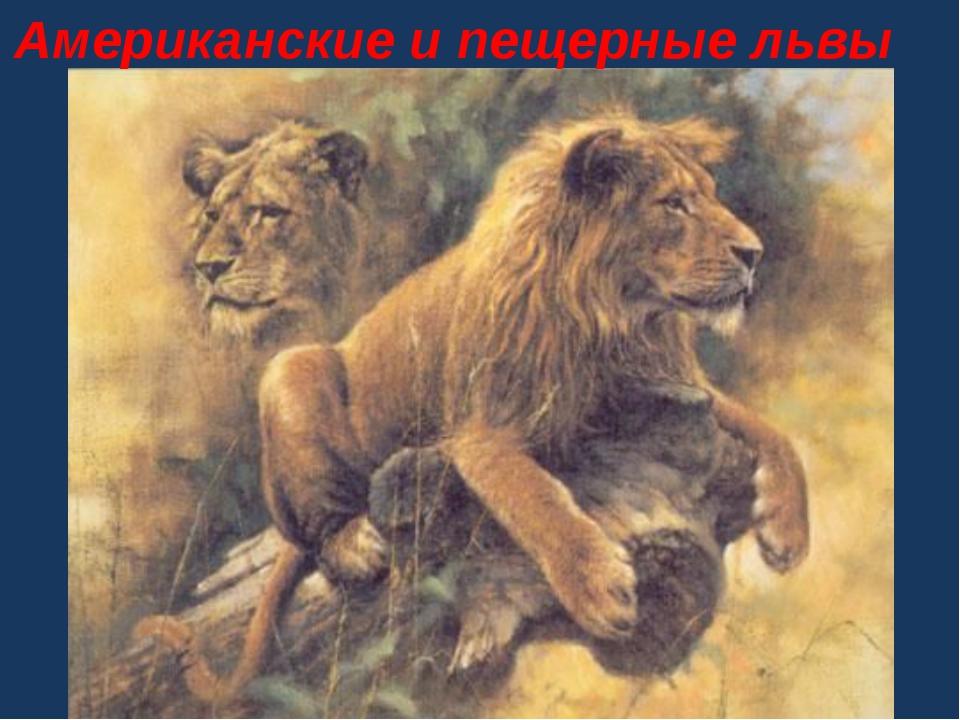 Американские и пещерные львы