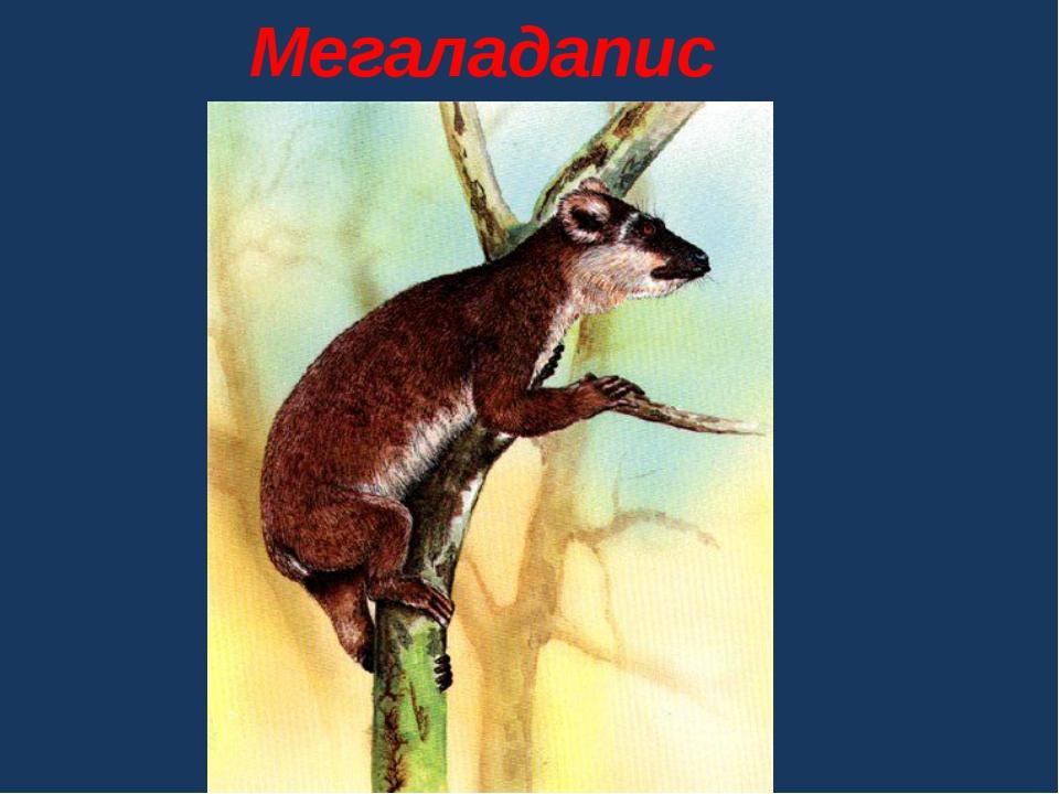 Мегаладапис
