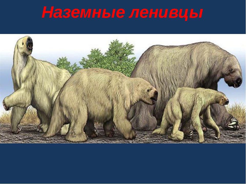 Наземные ленивцы