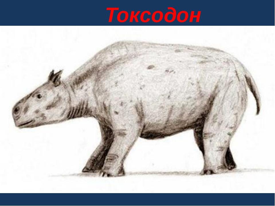 Токсодон