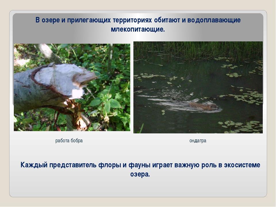 В озере и прилегающих территориях обитают и водоплавающие млекопитающие. рабо...