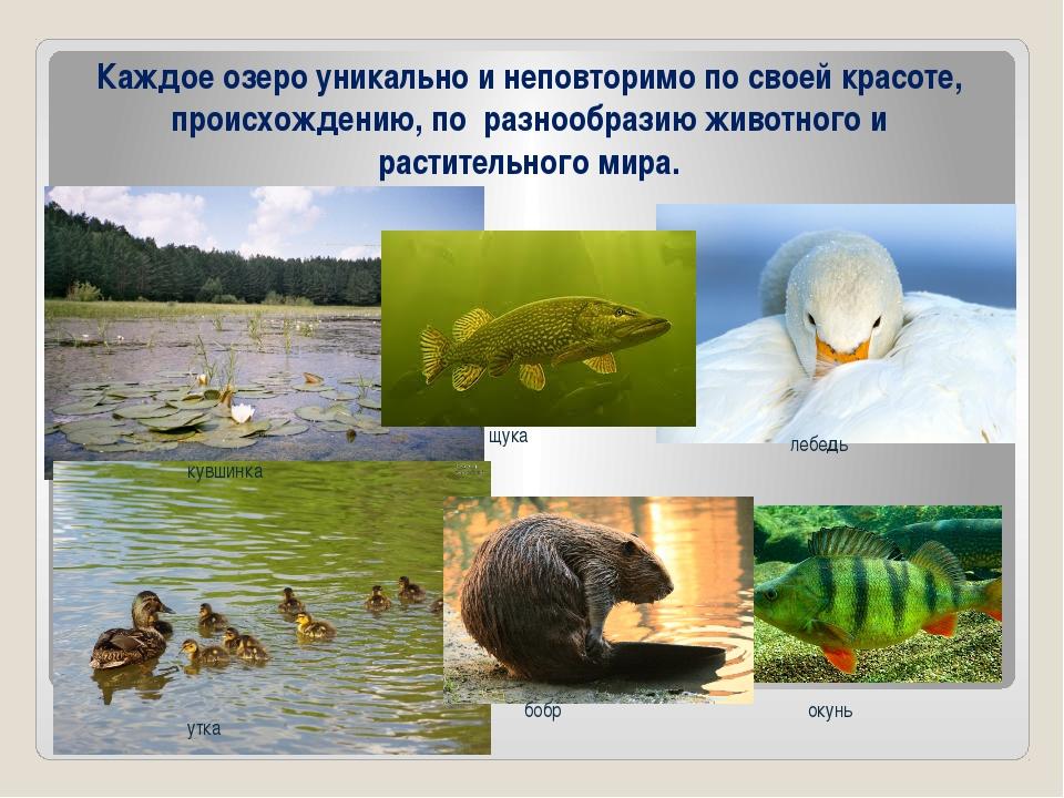 Каждое озеро уникально и неповторимо по своей красоте, происхождению, по разн...