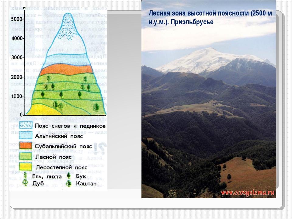 Высотная поясность Лесная зона высотной поясности (2500 м н.у.м.). Приэльбрусье