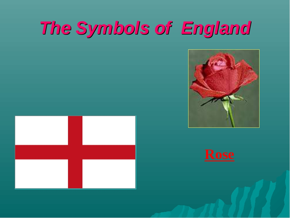 The Symbols of England Rose
