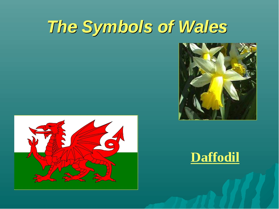 The Symbols of Wales Daffodil